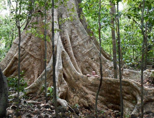 Cat Tien - Kenneth ved et kæmpe træ