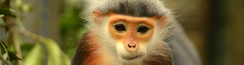 Cuc Phuong Nationalpark // se billeder og video her!