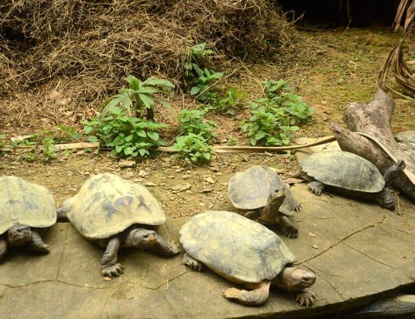 cuc-phuong-skildpadder