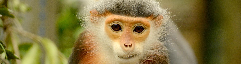 Den kinesiske kalender. I VIetnam og Kina har de forskellige dyr der representere de forskellige år, ikke månederne.