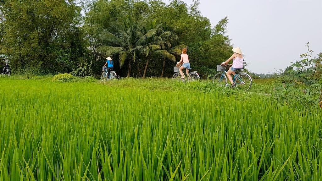 Hoi An cykeltur - gæster der cykler ved rismarker