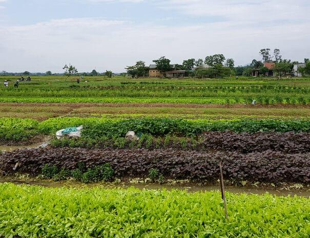 hue-cykeltur-flere-groensager