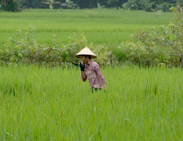 mai-chau-landmand-kvinde