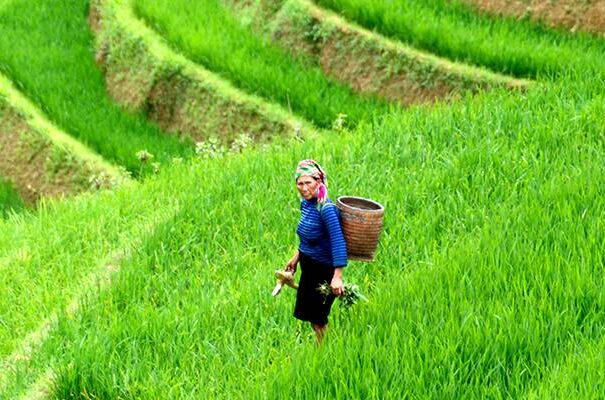 Sapa Vietnam - Trekking og vandring i Sapas bjerge. Bo i homestay, bungalow eller på hotel.