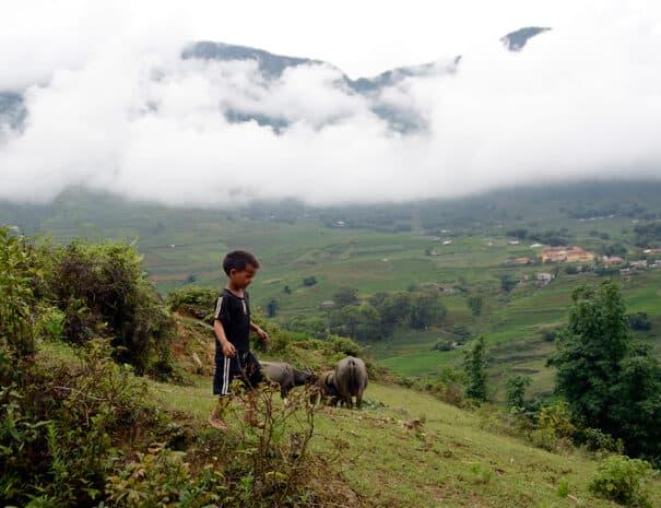 sapa-bjerge-barn-buffalo